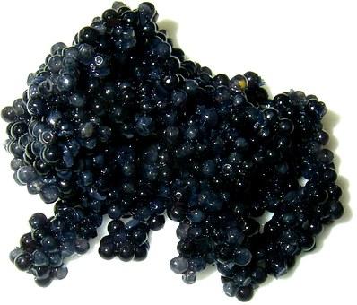caviar-74224__340